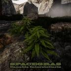 Spacegras