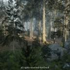 Conifer Forest Biome (UE5 EA)