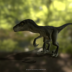 Raptor ala Striky