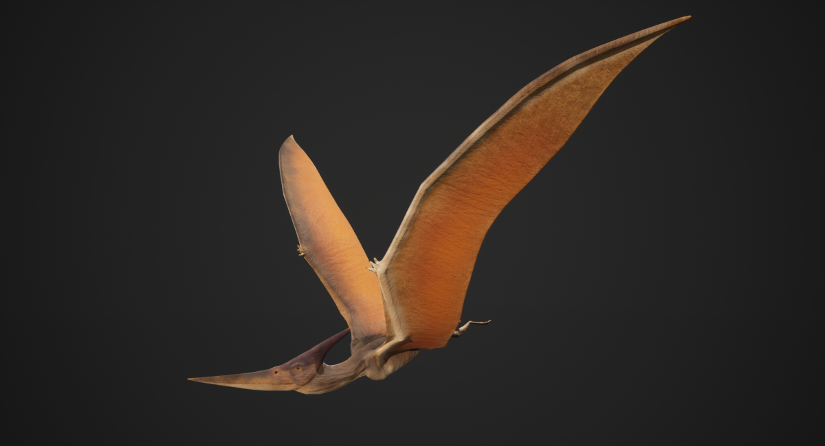 Pteranodon - Game Model -