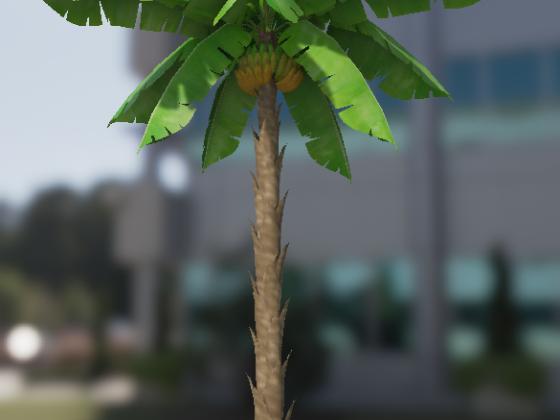 Bananen Palme